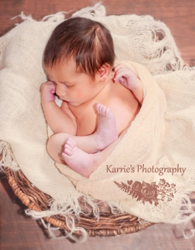 Newborn Posed Portrait sessions