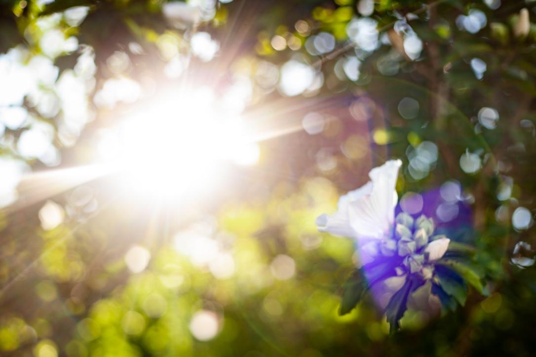 Sunrise-14